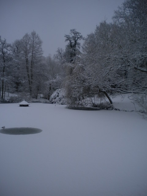 Winter pond scene, Golders Hill Park NW11