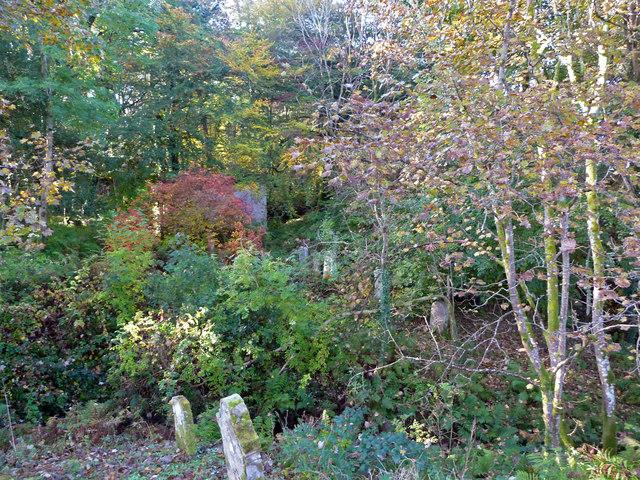 Overgrown part of Kilfinan churchyard