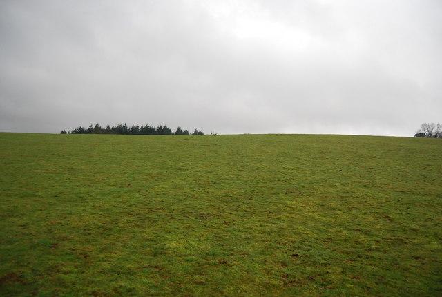 A hillside near Roebuck Farm