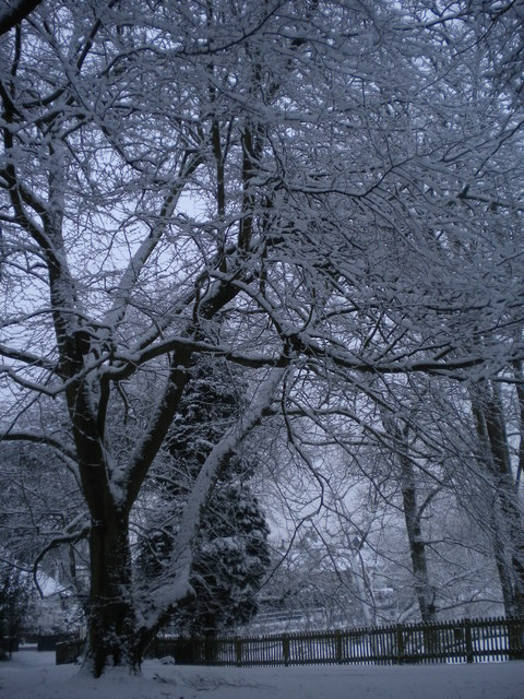 Snowy trees in Golders Hill Park NW11