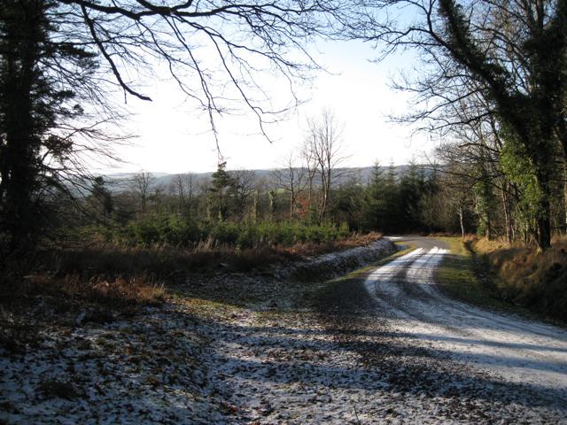 Z-bend on forestry track, Higher Kiddens (2)