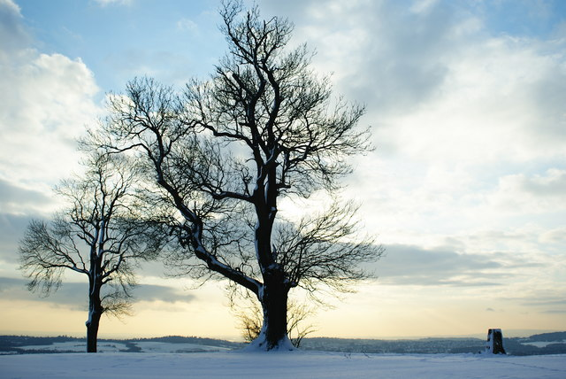 Trees by the Trig Point, Ockley Hill, Chaldon, Surrey