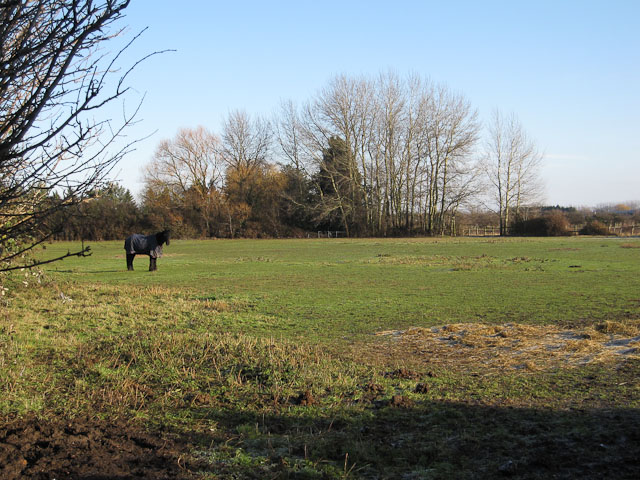 Horse Paddock by Hasse Road