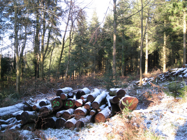 Logpile, Higher Kiddens, Haldon Forest Park