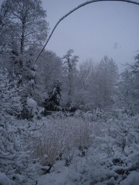 Snowy park scene, Golders Hill Park NW11