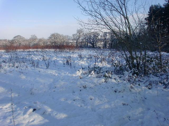 Field in Trent Park, London N14