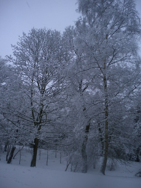 Winter trees, Golders Hill Park NW11