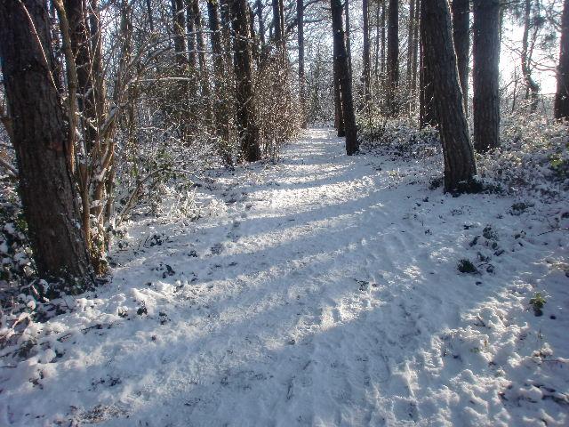 Footpath through wood, Trent Park, London N14