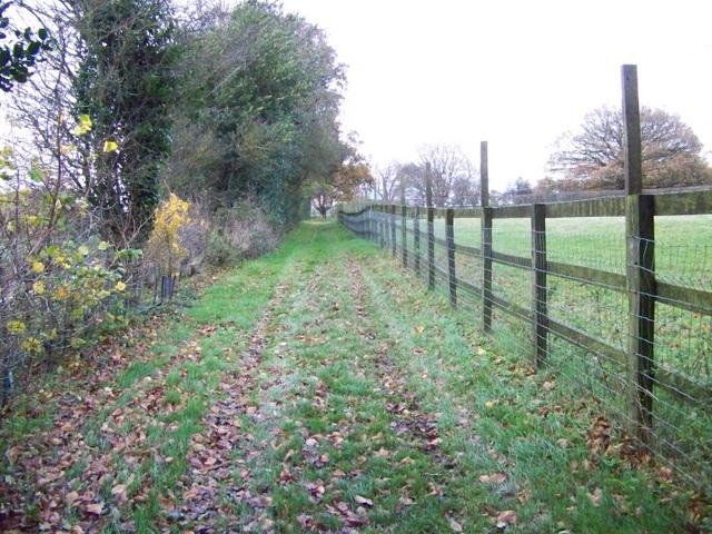 Bridleway, Lambourn Woodland