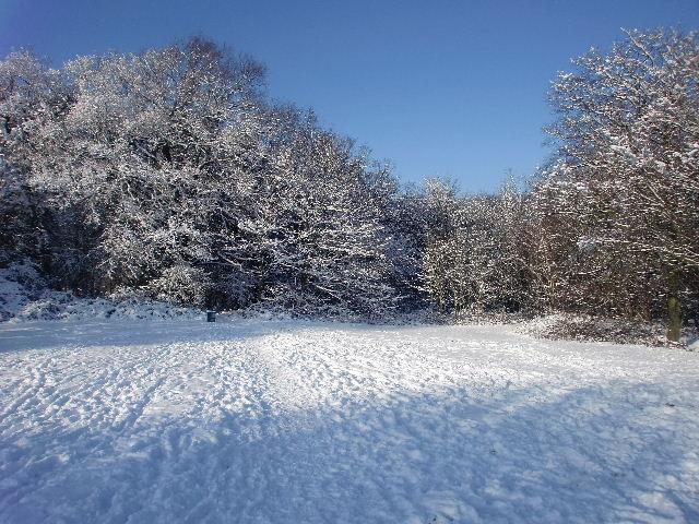 Winter wonderland in Trent Park, London N14