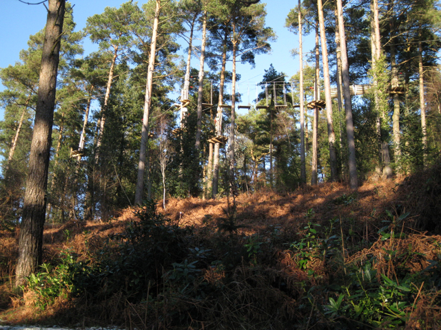 Treetop obstacle course, Haldon Forest Park