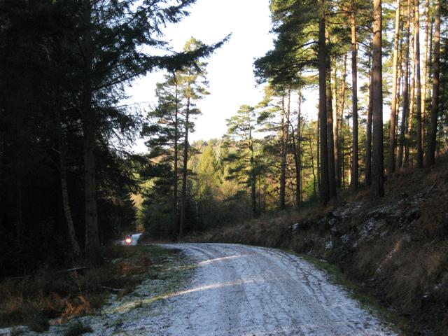 Track below Buller's Hill, Haldon Forest Park