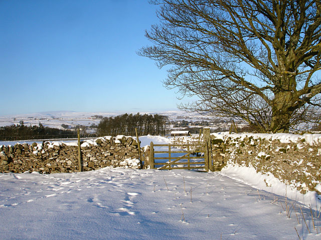 Difficult gate on Gilmonby bridleway