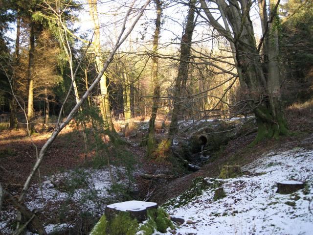 Stream culverted under track, Haldon Forest Park