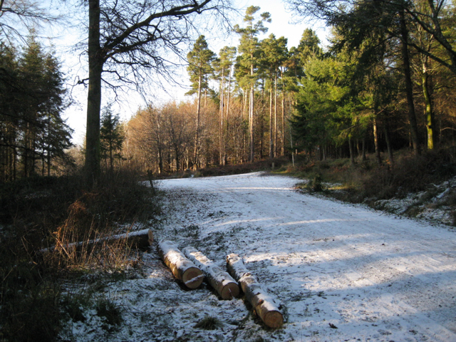 Junction of tracks, Haldon Forest Park