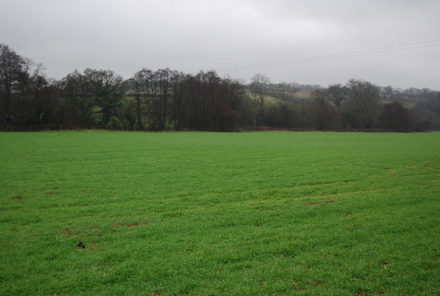Field near Leigh Cottage
