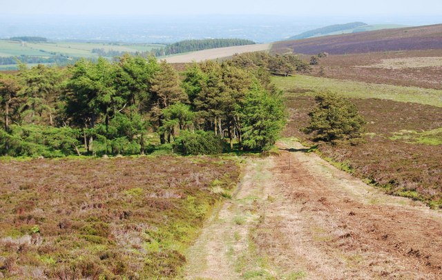Footpath towards the triangular wood