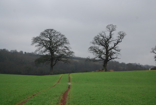 Two trees by the footpath