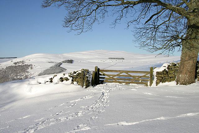 A field gate on Buckholm Hill