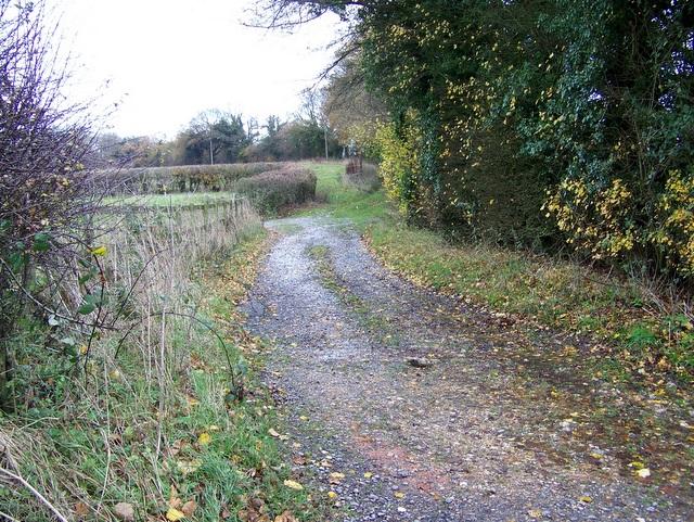 Bridleway, Lambourn Woodlands