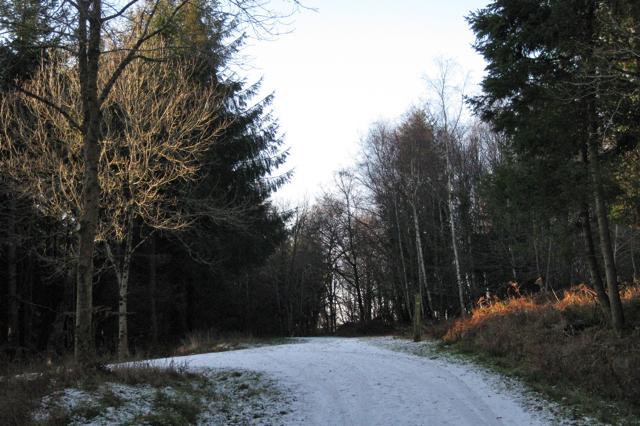 Junction of tracks northwest of Haldon Forest Park
