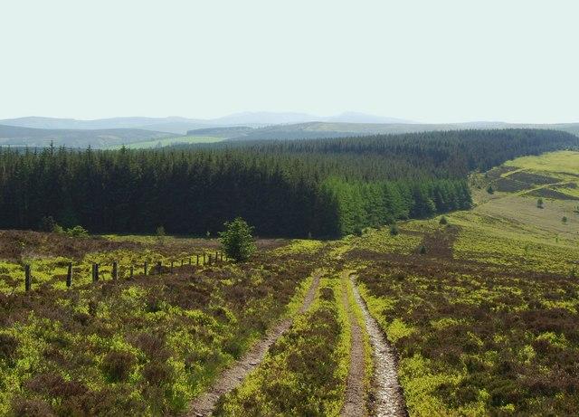 Nantyr Forest from Vivod Mountain