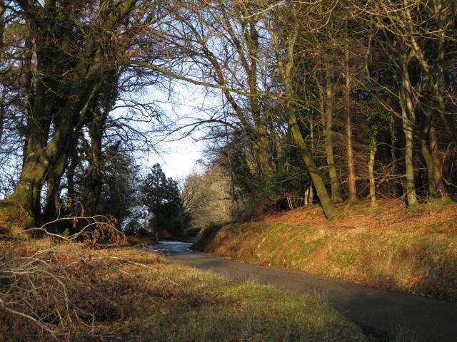 Trusham-Dunchideock lane, Haldon