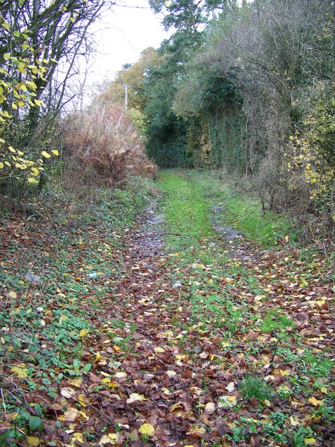 Footpath, Lambourn Woodlands