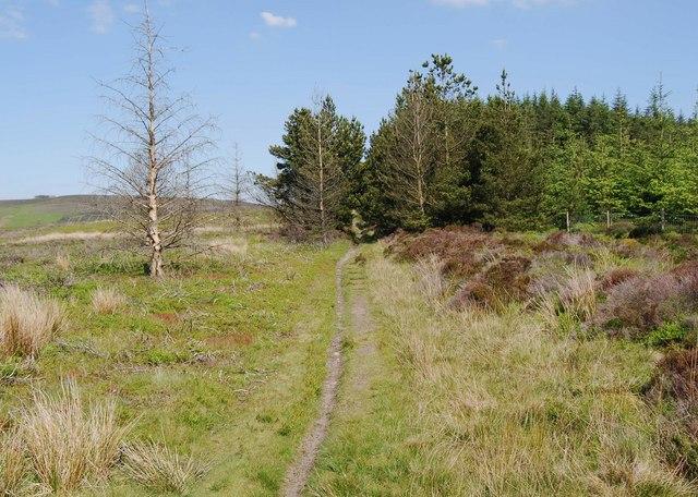 Llwybr Gogledd y Berwyn beside Nantyr Forest