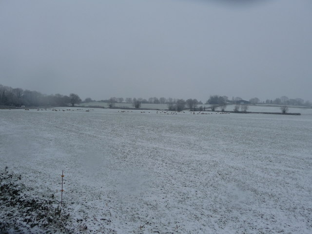 Mid Devon : A Field of Snow & Sheep