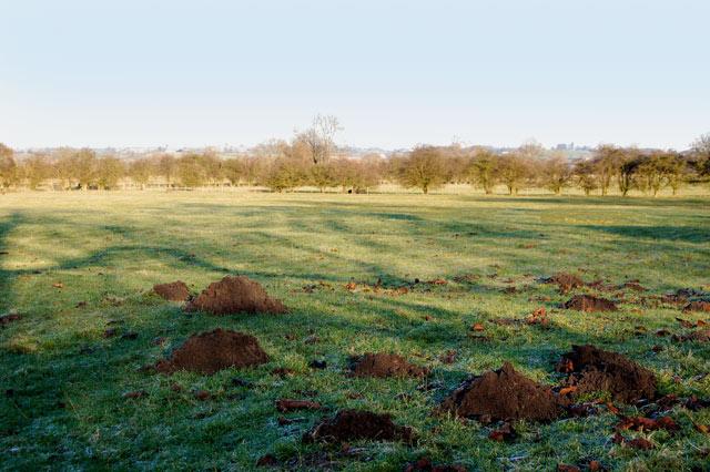 Molehills on farmland near Willoughby House