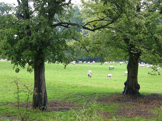 Field adjacent to Priory carpark, Much Wenlock