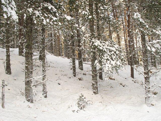 Open forest, Auchteraw Woods