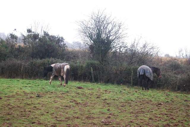 Horses by the footpath near Water Farm