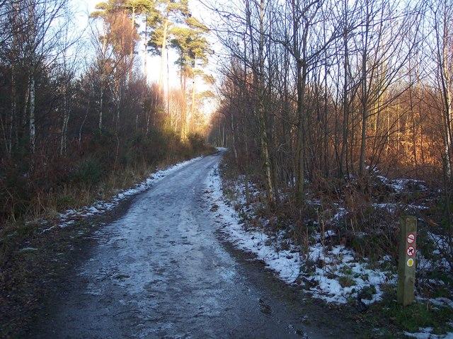 Footpath in Blean Woods