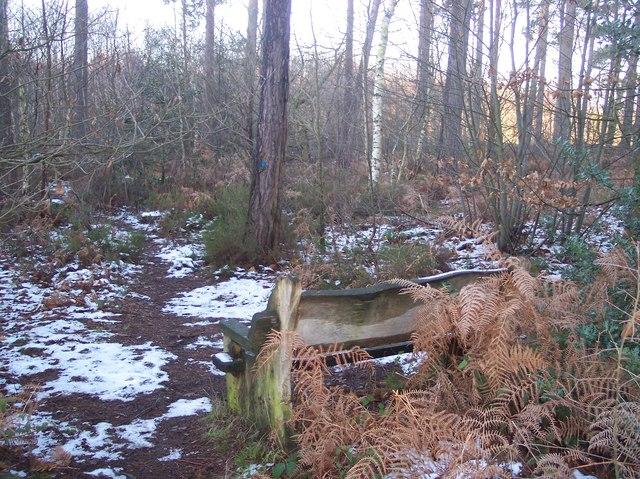 Bench in Blean Woods
