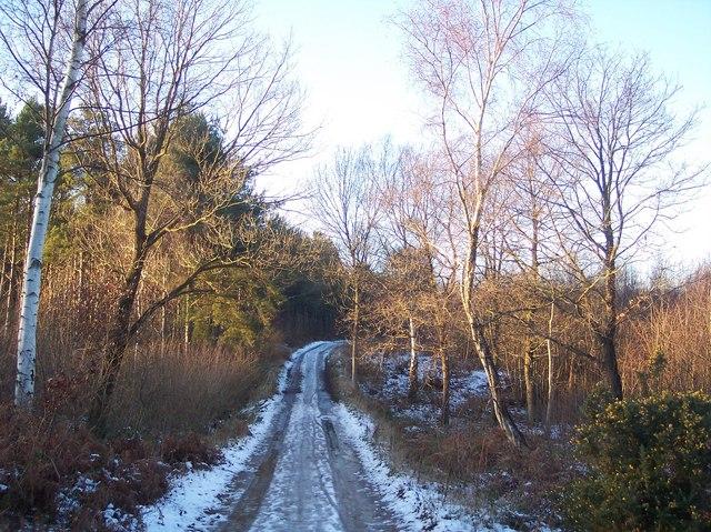 Footpath in Blean wood to Blean