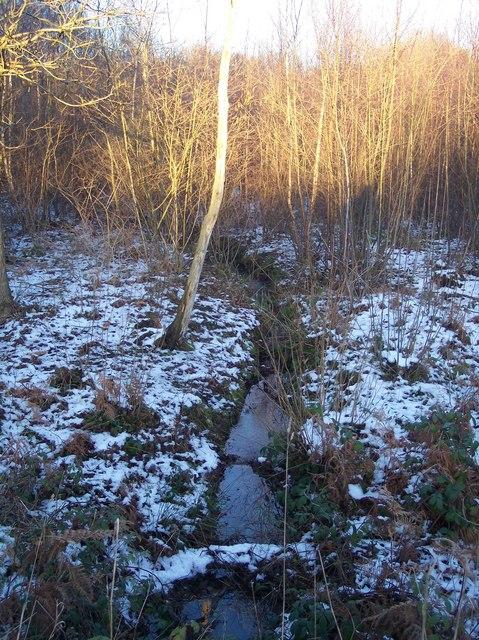 Stream in Church Wood
