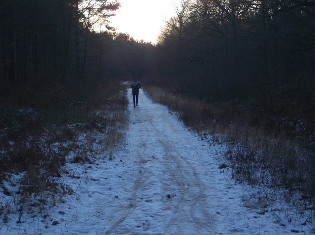 Jogger in Church Wood