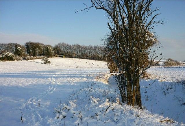 Snowy fields in East Ilsley
