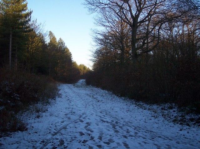 Track beside Blean Wood National Nature Reserve