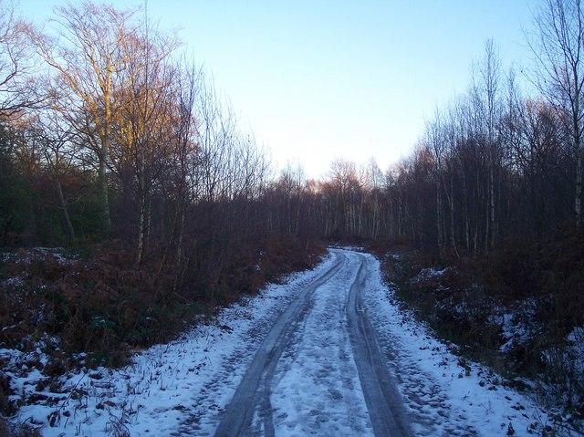 Footpath beside Blean Wood National Nature Reserve