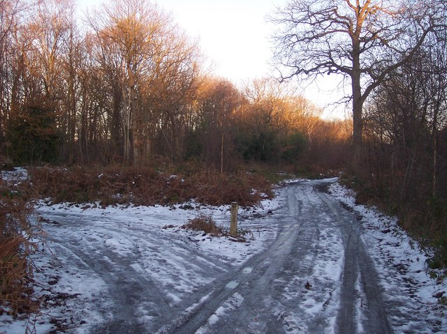 Footpath junction in Grimshill Wood