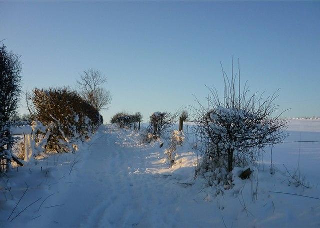 Path alongside Summerdown, East Ilsley