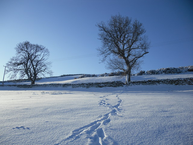 Old Ash Trees, Blynlee