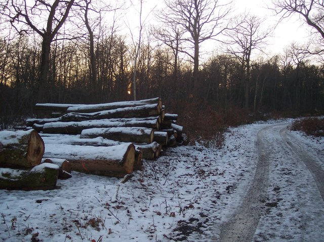 Log Pile on track in Grimshill Wood
