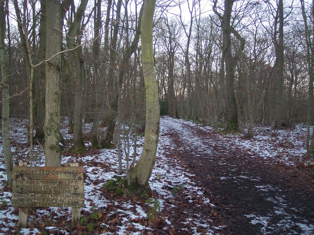 Neglected Coppice near Mincing Wood