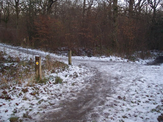 Footpath and track junction in Blean Woods
