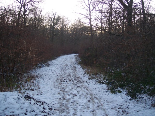 Track in Church Wood