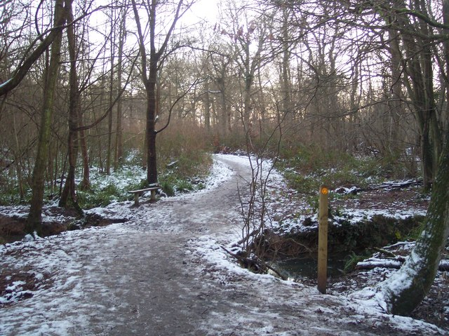 Footpath and footbridge in Blean Woods
